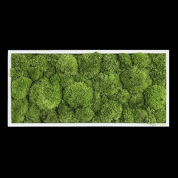 Pole Moss Picture 57x27 Cm