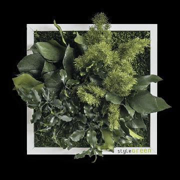 Plant Island Fringe 22 x 22 Cms
