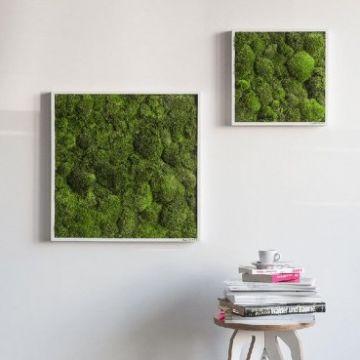 Pole Moss Fringe 80 x 80 Cm