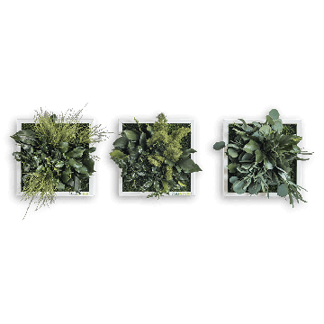 Plant Island Fringe 22 x 22 Cms Set of 3