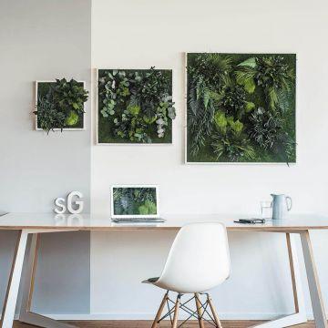 Plant Island Fringe 35×35 Cms