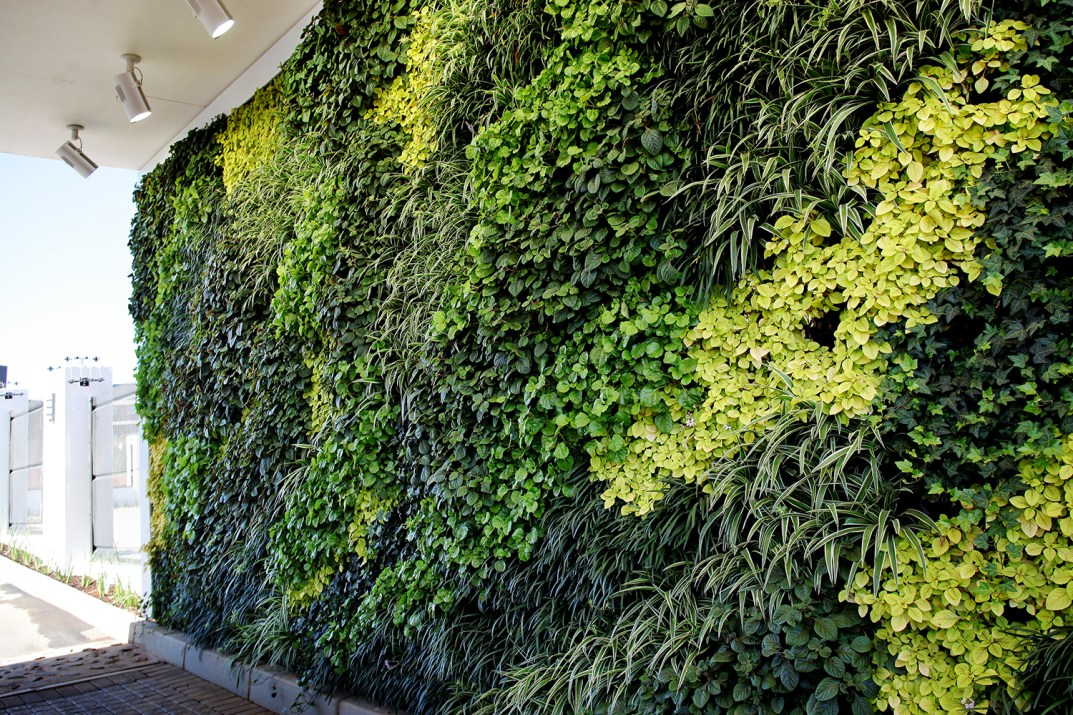 Biophilia - Using Nature to Nuture the Workspace